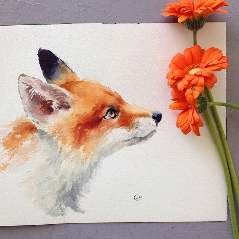 Fox by cmwatercolors art arts paint painting drawing