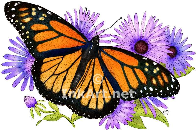 1000 images about illustrations of butterflies on pinterest