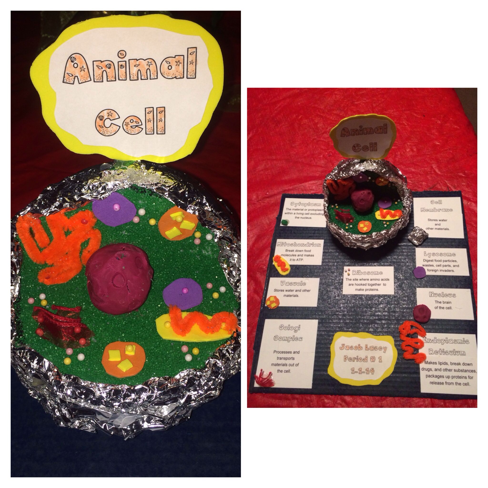 Jacob S 7th Grade Animal Cell Science Project