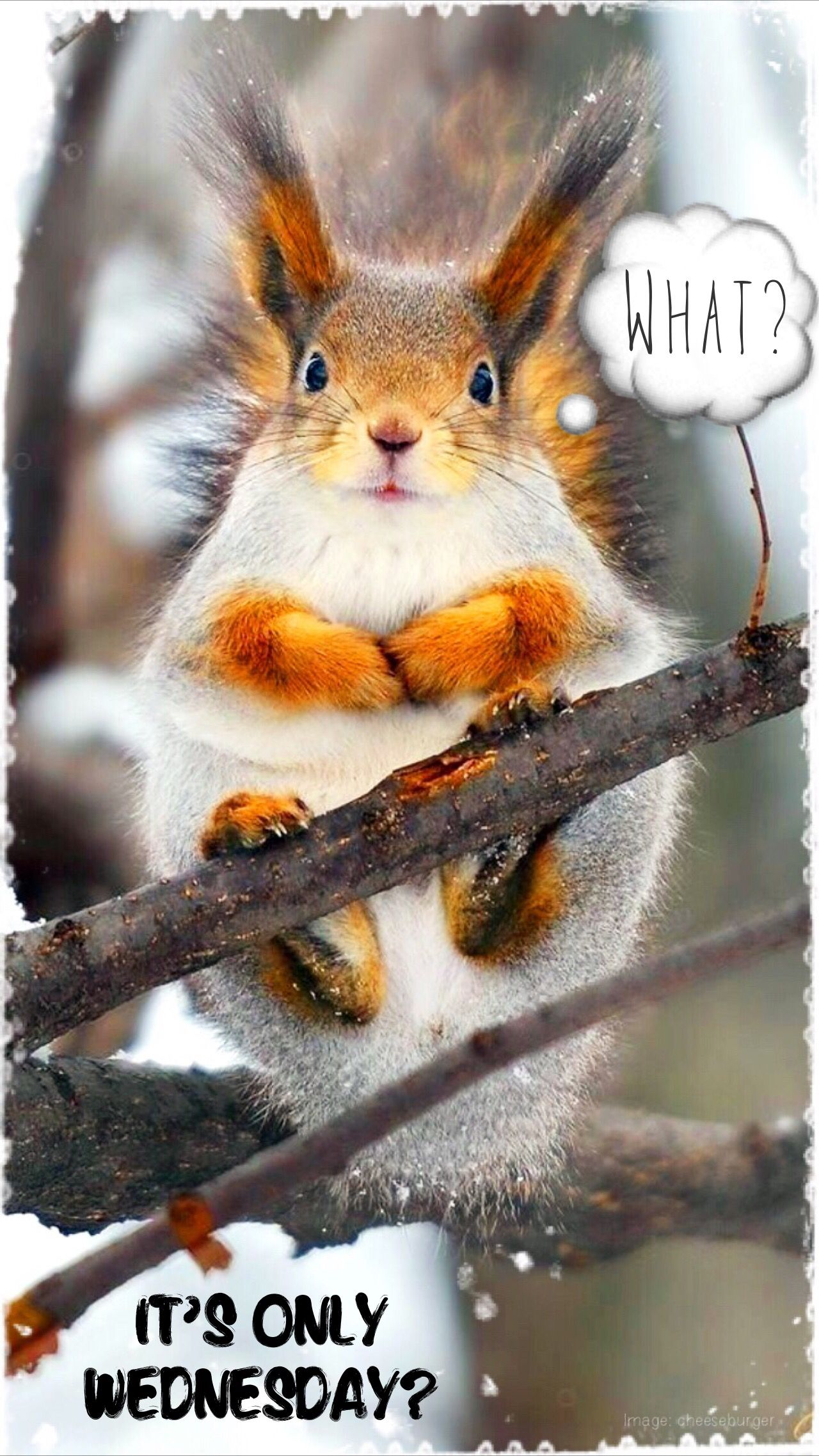 Wednesday humor Animal funny What? It's only Wednesday