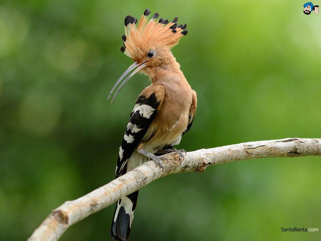 birds hd wallpaper # | my birds | pinterest | bird, bird watching