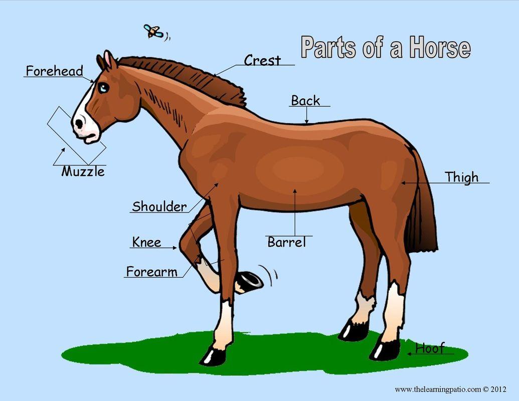 Horsemanship Badge Label Parts On A Horse Color Sheets