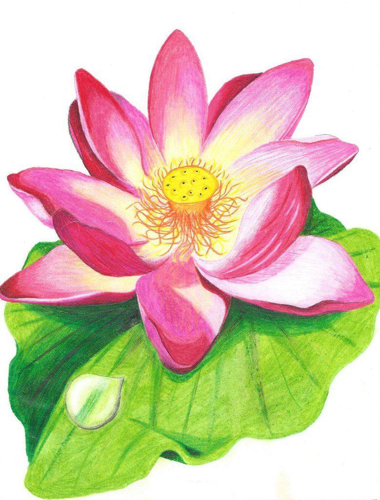 Lotus flower drawn with crayons Coloring designs