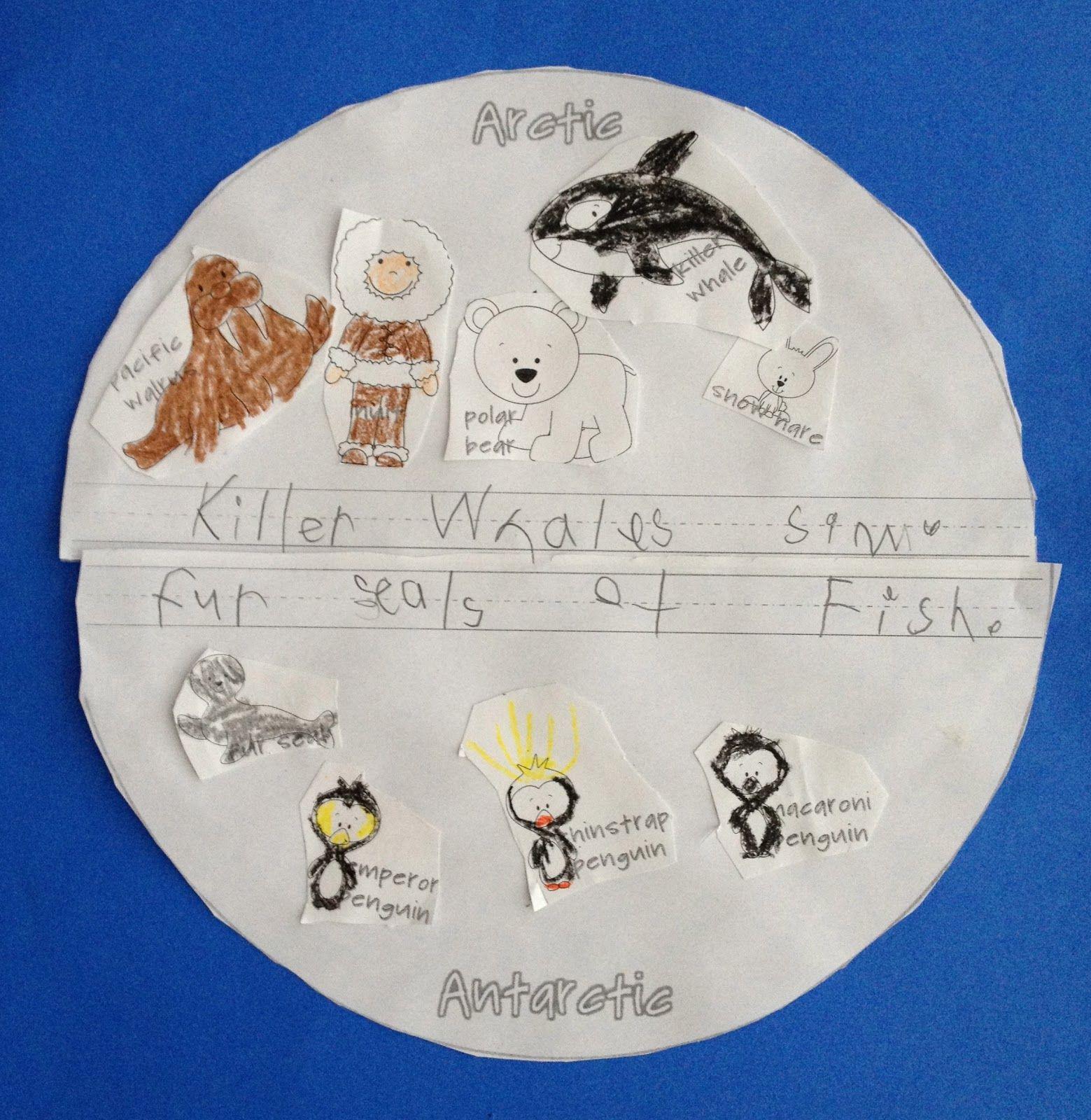 Arctic Animals Vs Antarctic Animals Sort Animals Amp Write What You Learned