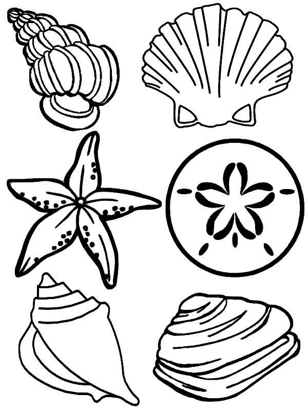 1000 images about shells on pinterest coloring pages sea