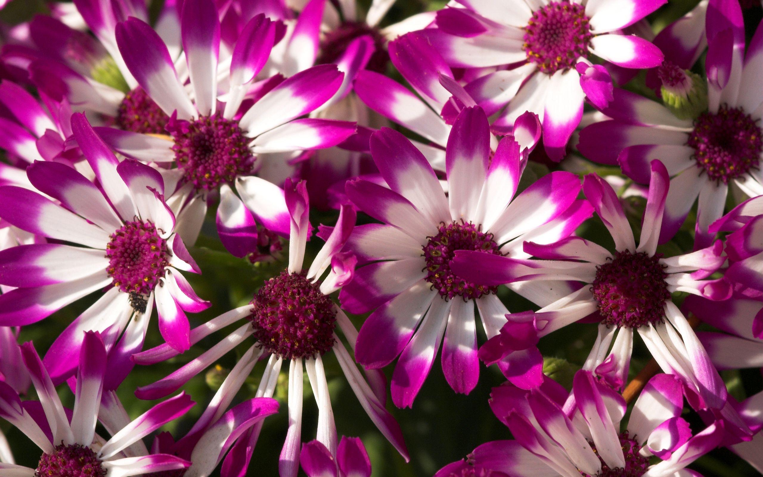 Purple Flower Images Nature Pinterest Flower