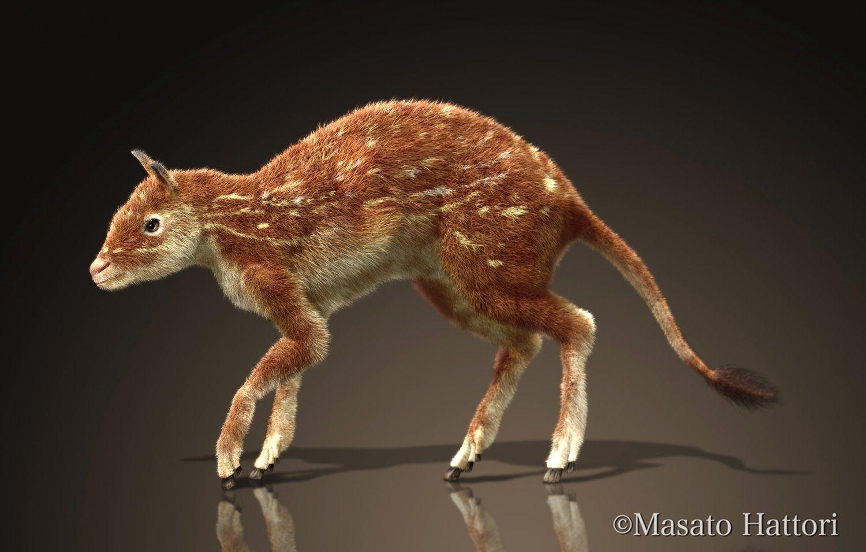 Diacodexis is an extinct genus of small herbivore mammal