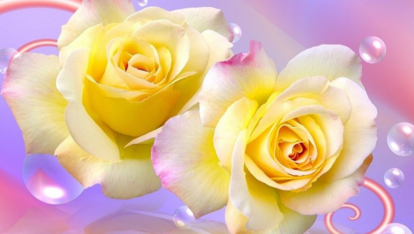 Download Free Double Yellow Roses The Wallpaper 1360x768