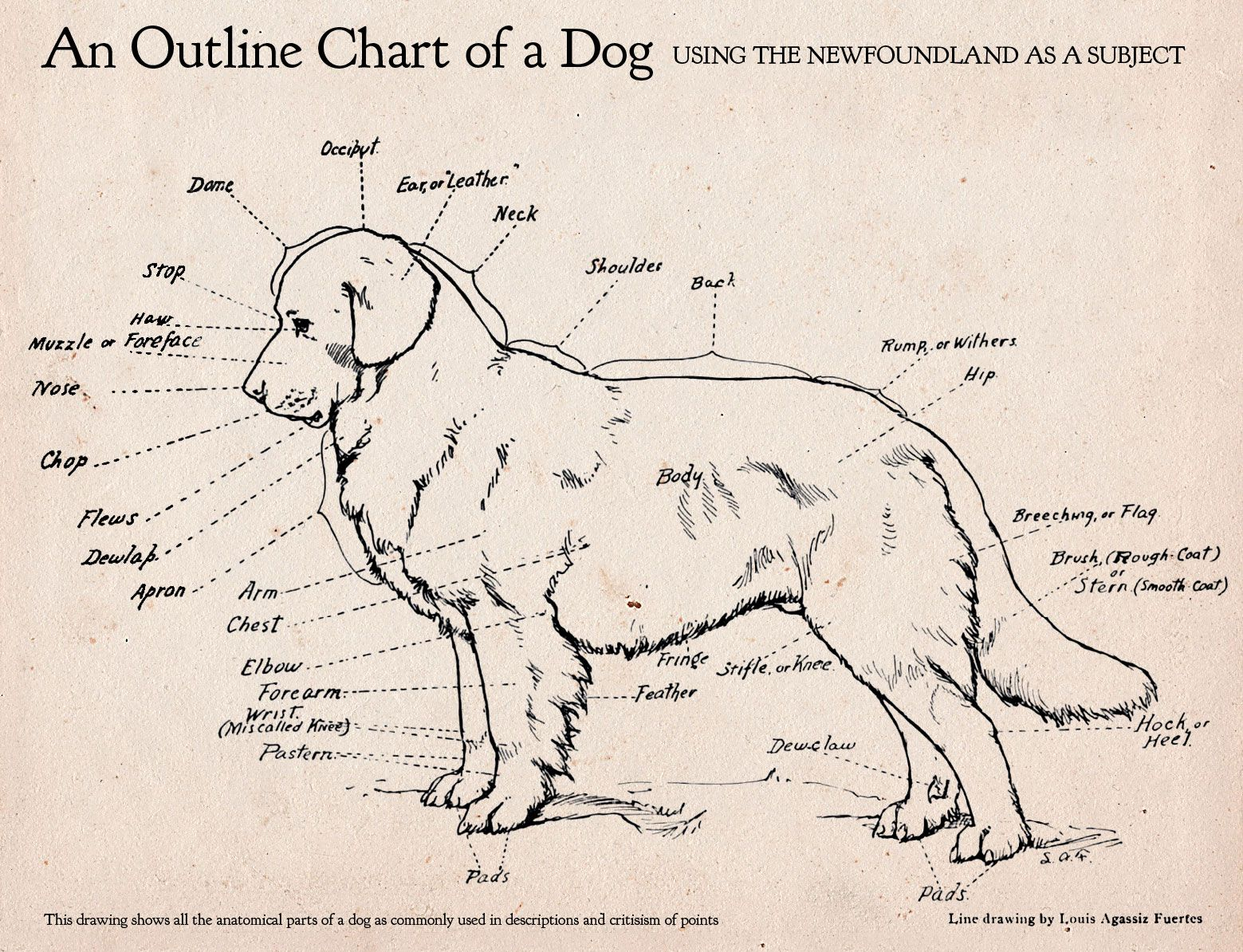 Here S An Awesome Dog Anatomy Diagram