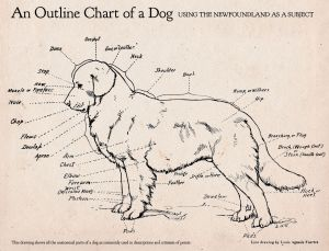 Here's an awesome dog anatomy diagram! | Random Photos
