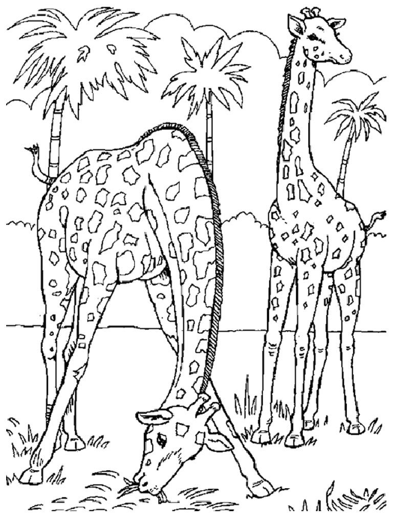 1000 images about coloring pages animals on pinterest animal