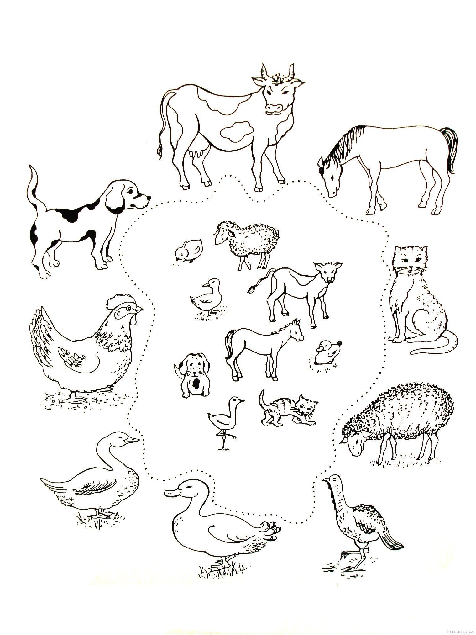Zvířata a jejich mláďata icreative.cz Kreativní