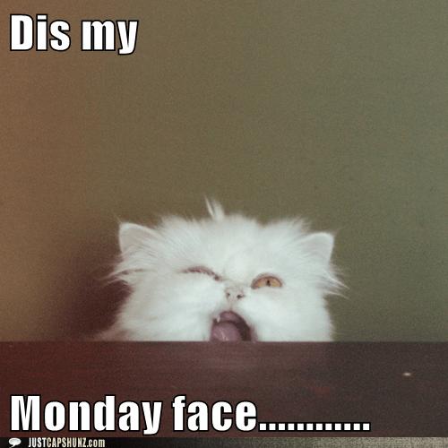 monday meme funny Google Search ^meow^ Pinterest