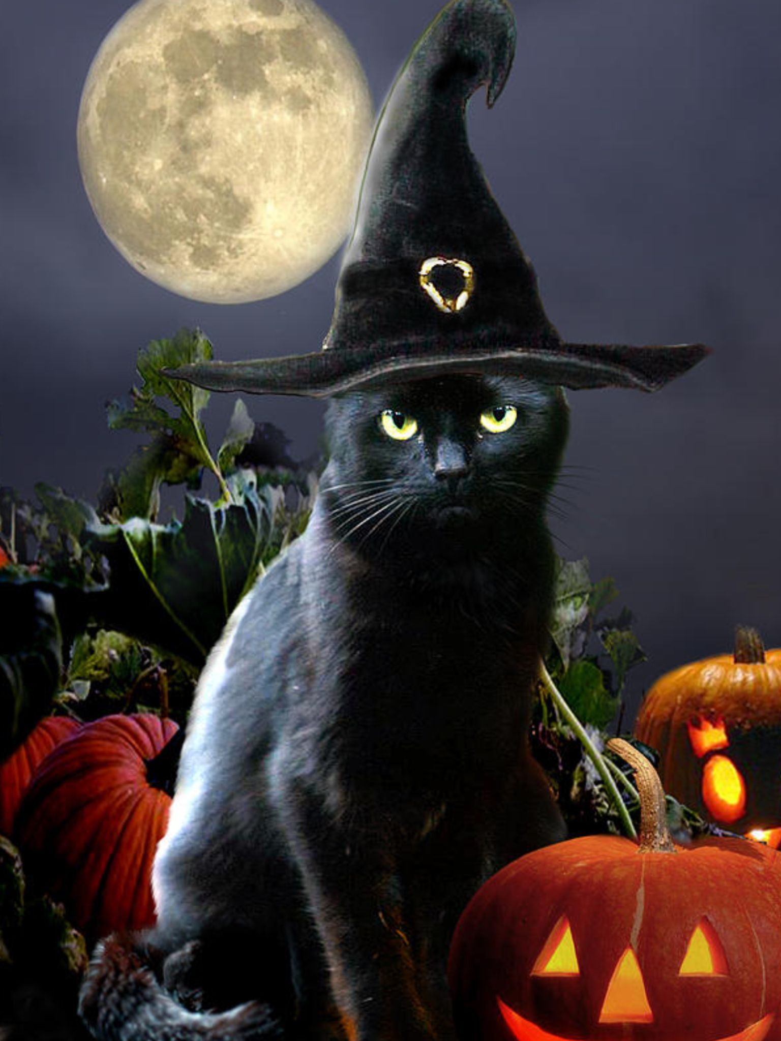 Bewitched Black Cat spirits & spooks Pinterest Grim