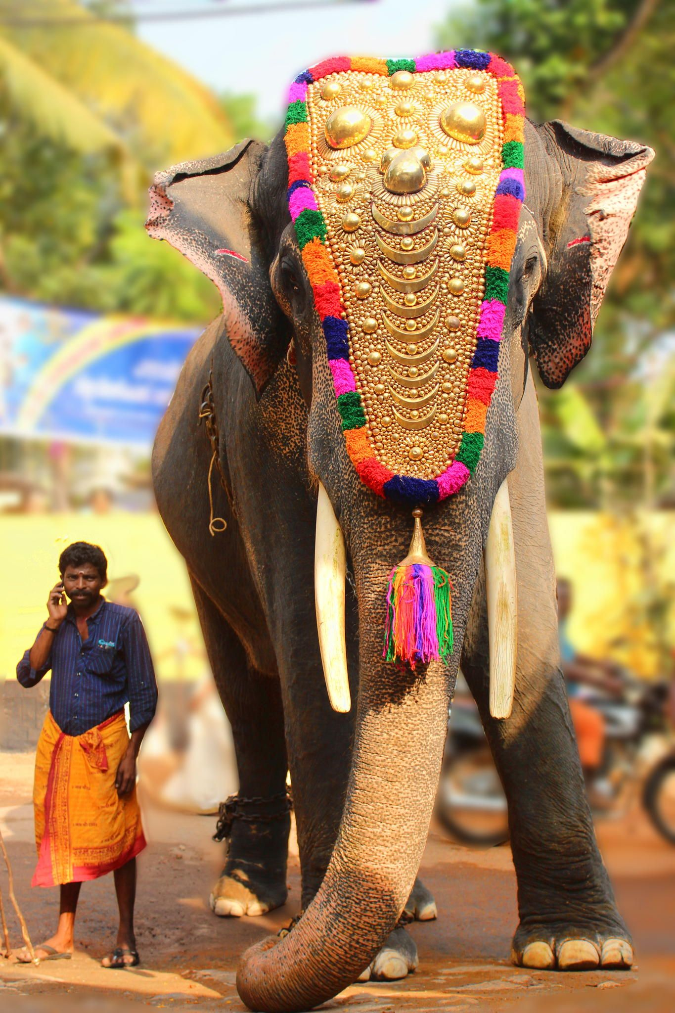 Festival in Kerala, India india Pinterest Kerala