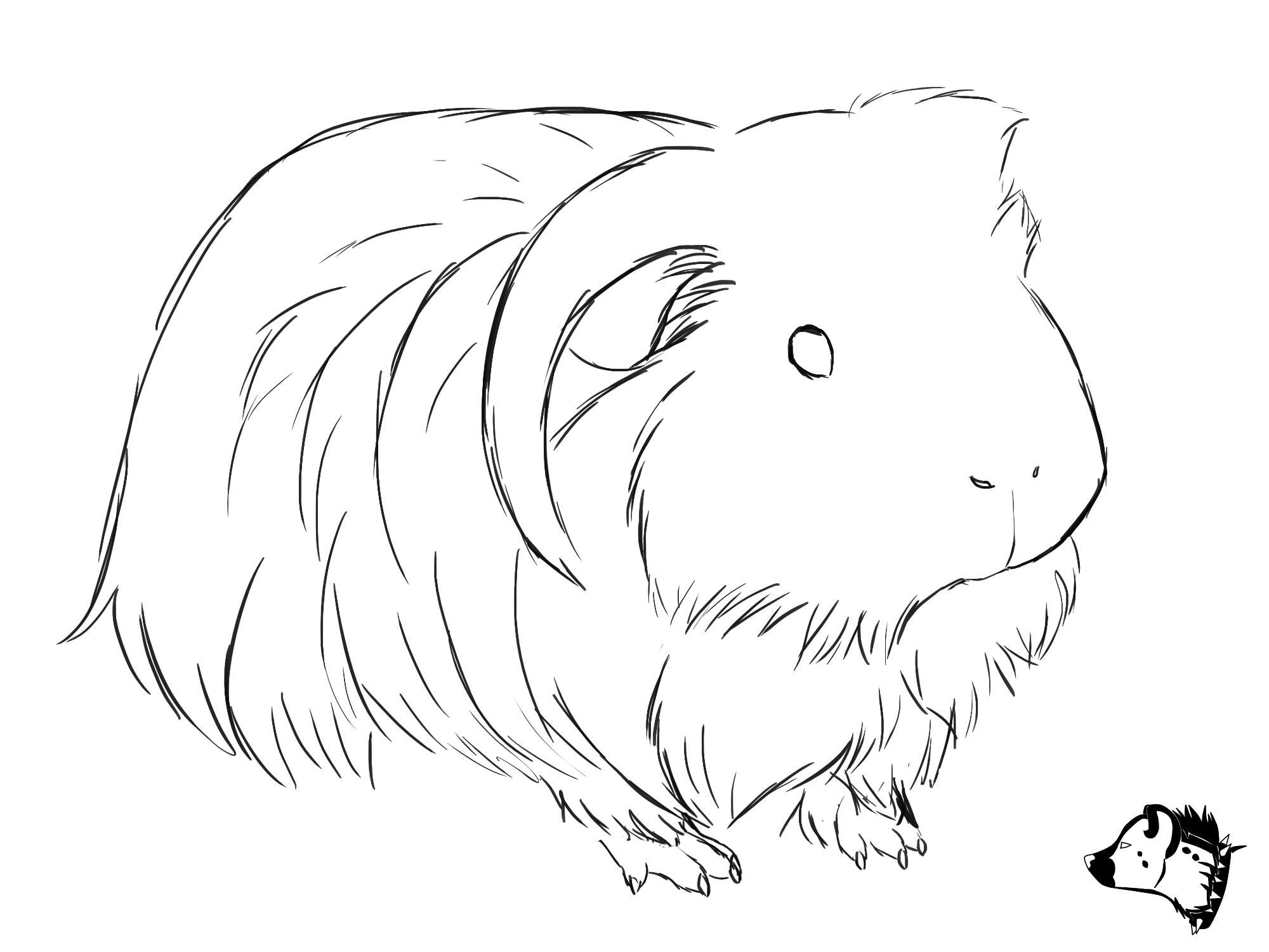 Sketch Drawing From Guineapig Town
