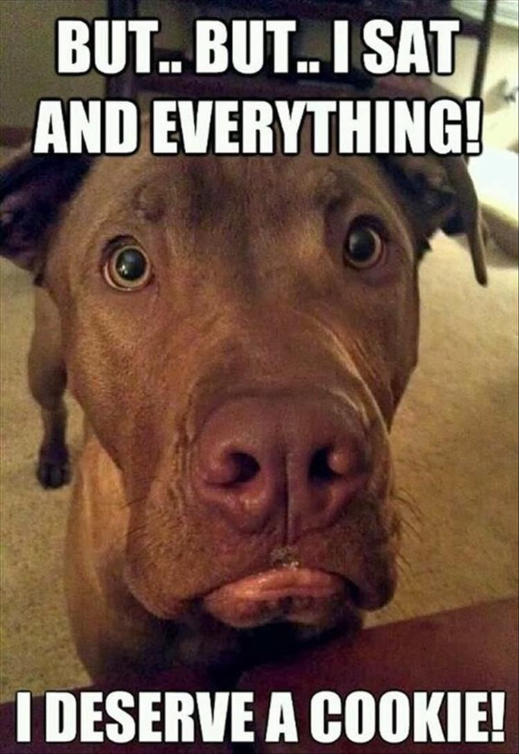 Funny Animal Pictures Of The Day 21 Pics Funny Animals