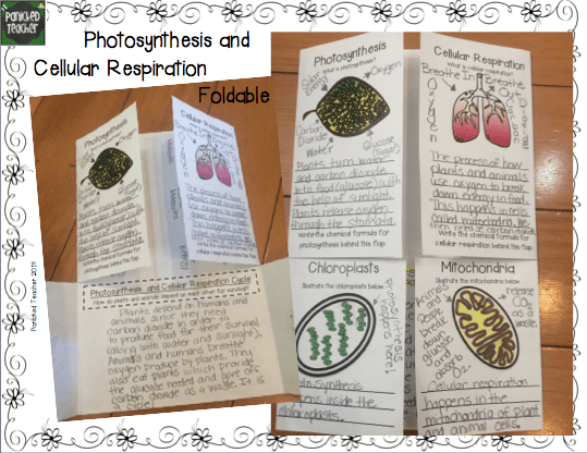 Teaching Photosynthesis and Cellular Respiration while