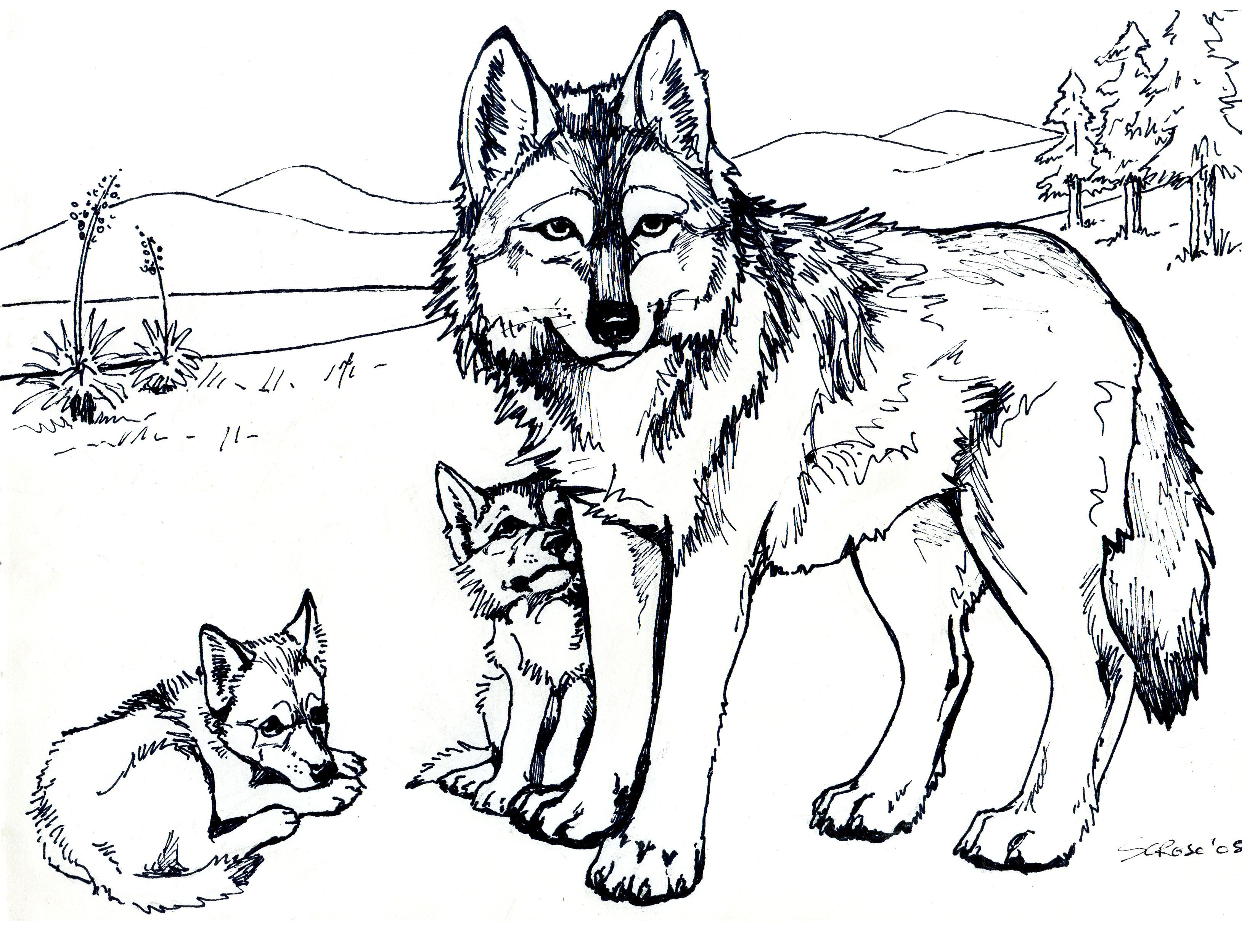 coloring pages coloring pages for kids and wolves on pinterest