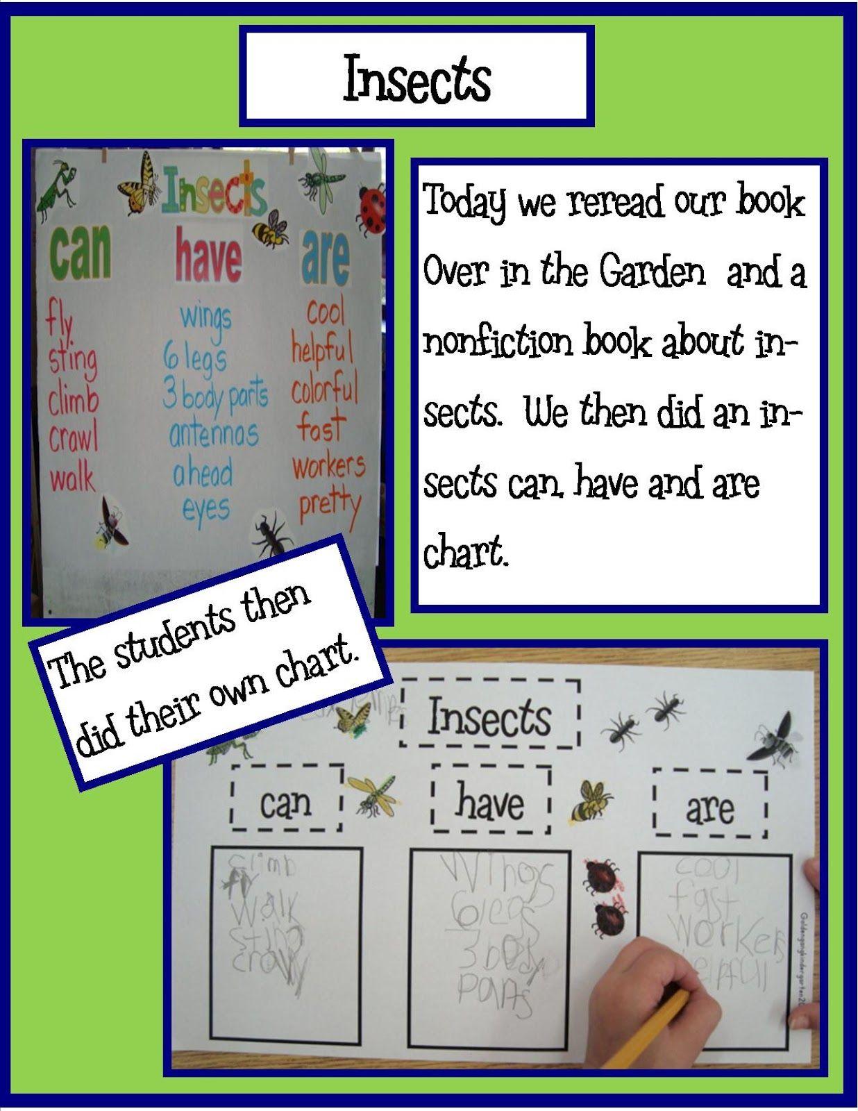 Golden Gang Kindergarten Insects