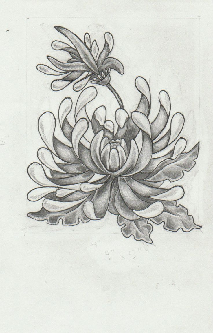 chrysanthemum tattoo Google Search Tattoos Pinterest