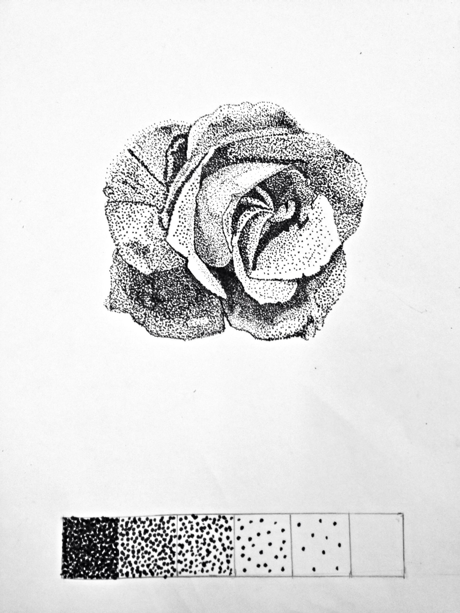 Rose Dot Pointillism Art Project Using A Calligraphy Pen 6