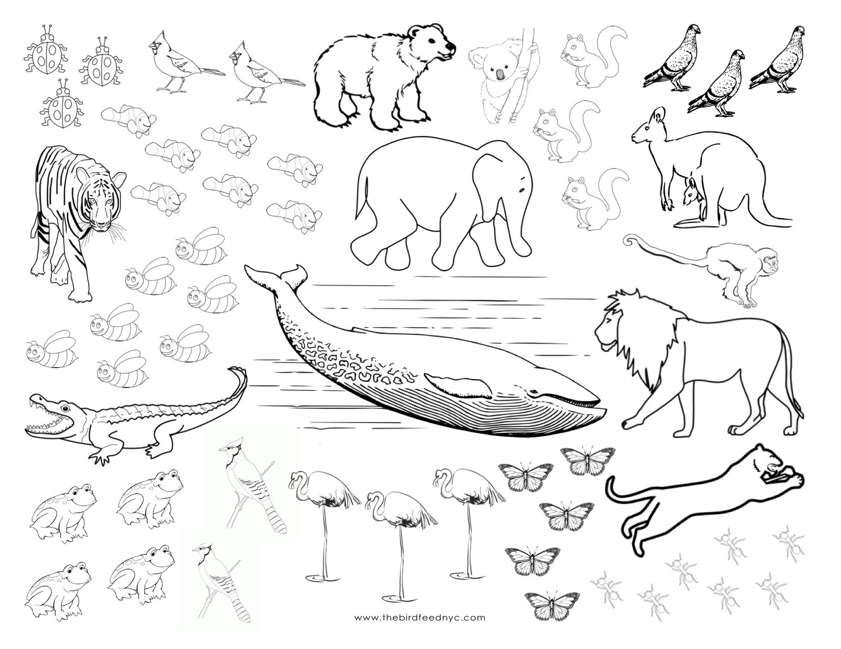 Animals Coloring And Counting Sheet