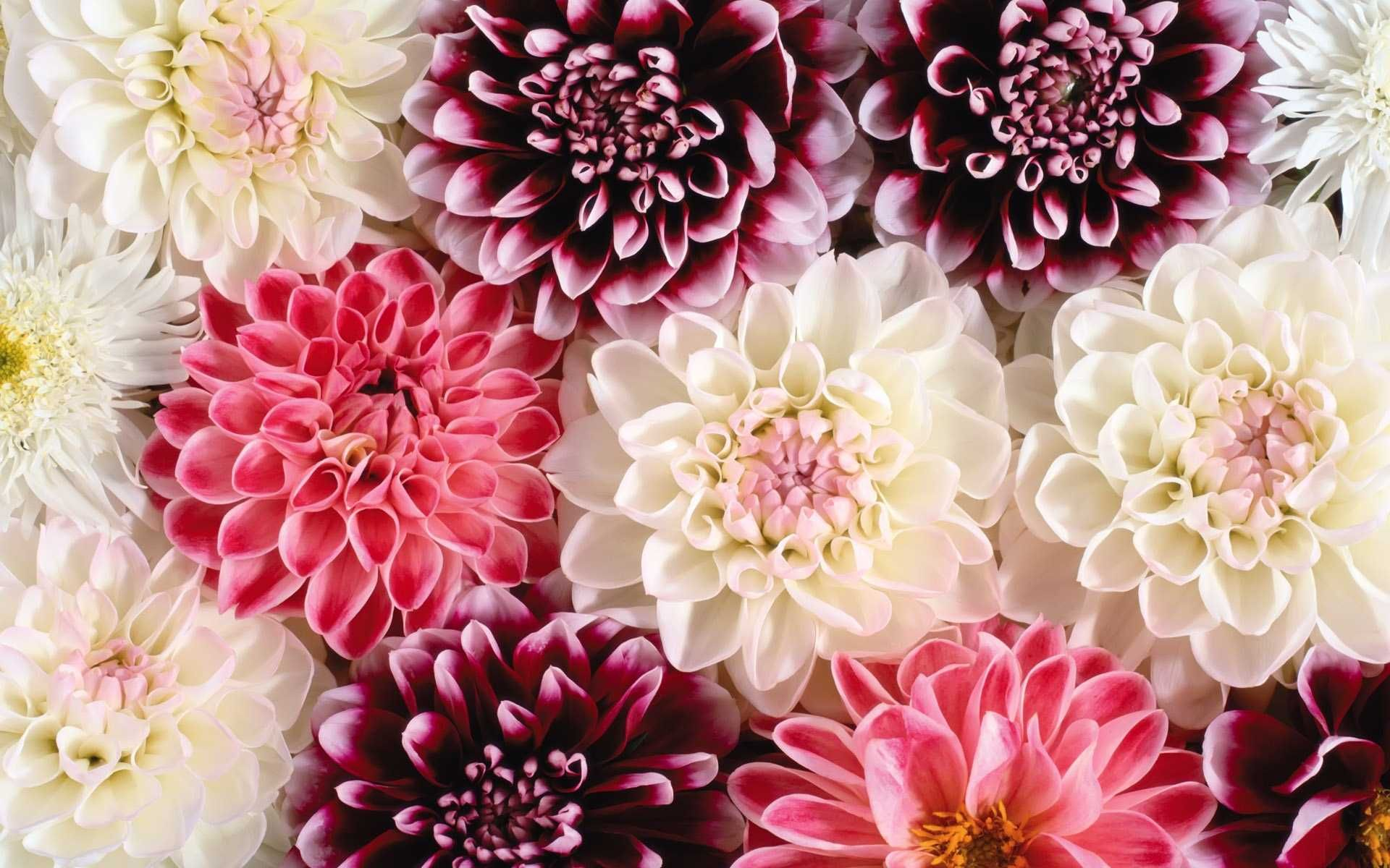 Hd Flower Wallpapers HD Hd Vintage Background Floral