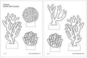 1000 images about school project on pinterest coral reefs