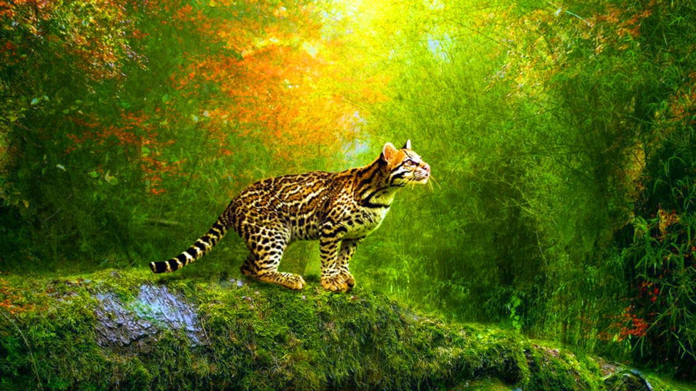3d Moving Wallpaper Widescreen Abstract Wallpapers