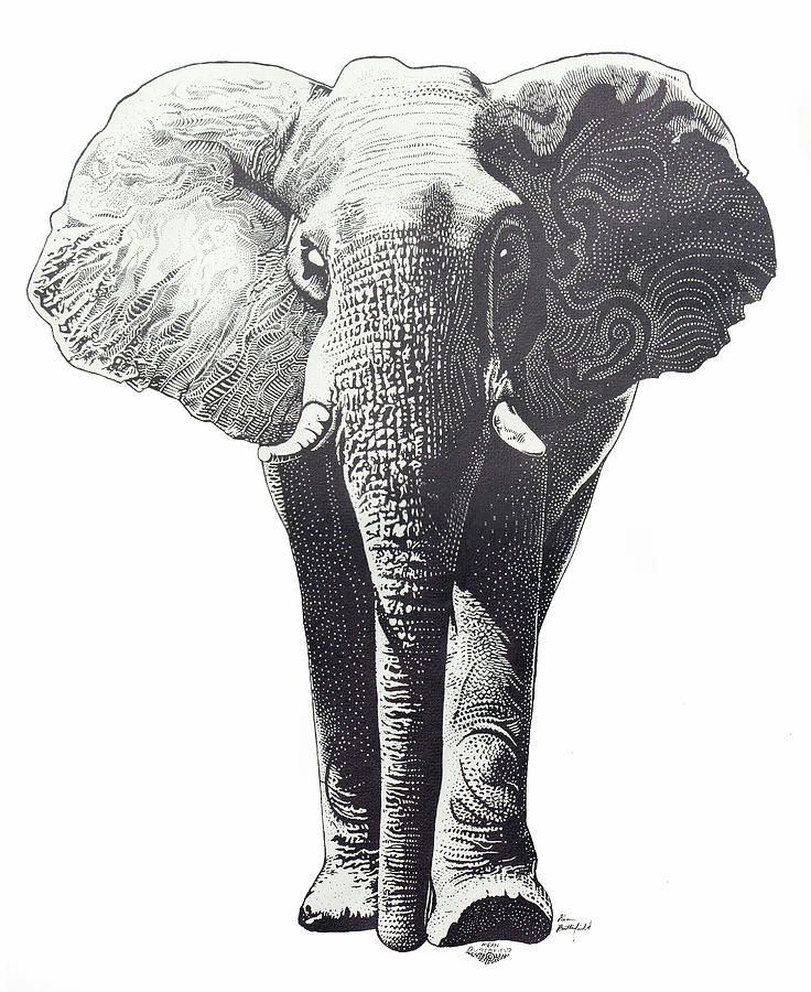 elephant drawing Google Search Creative Pinterest