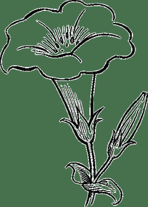 Gambar Bunga Kartun Hitam Putih Untuk Mewarnai Formas