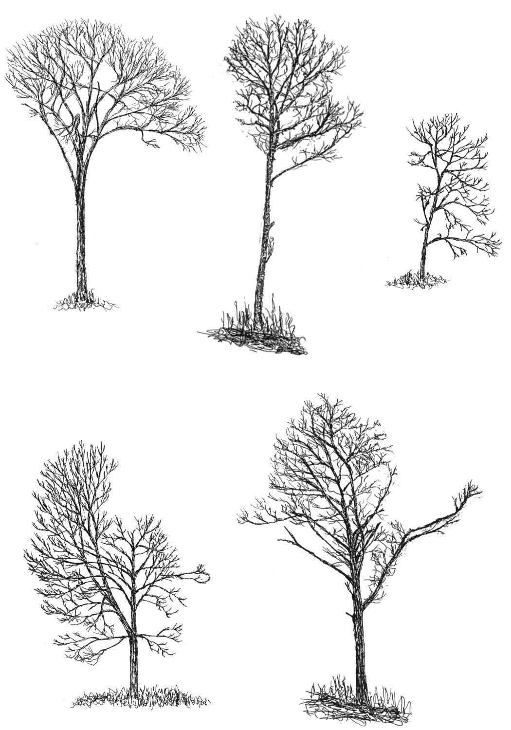 Trees Drawings