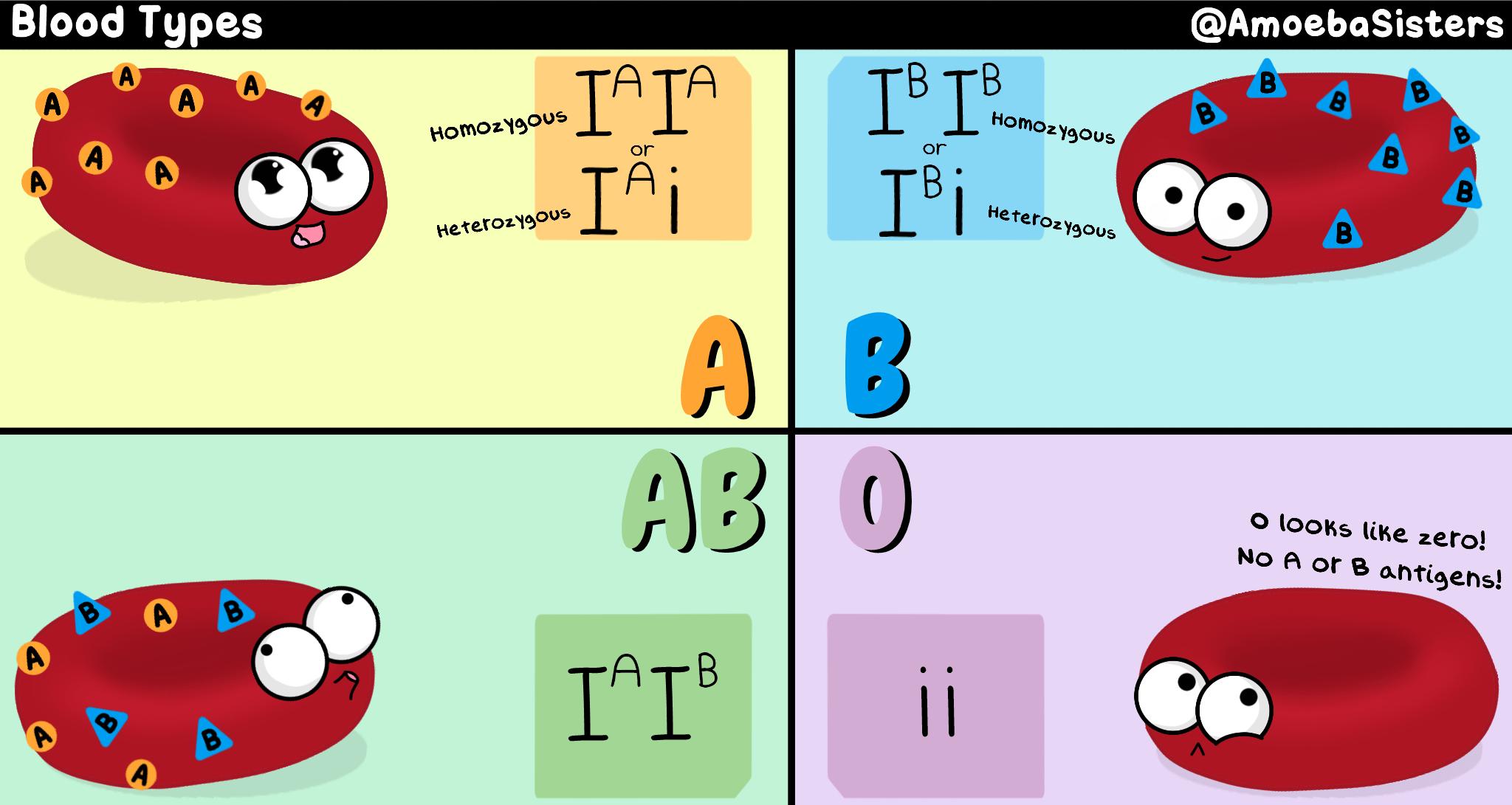 A Handy Blood Type Chart With The Genotypes Phenotypes