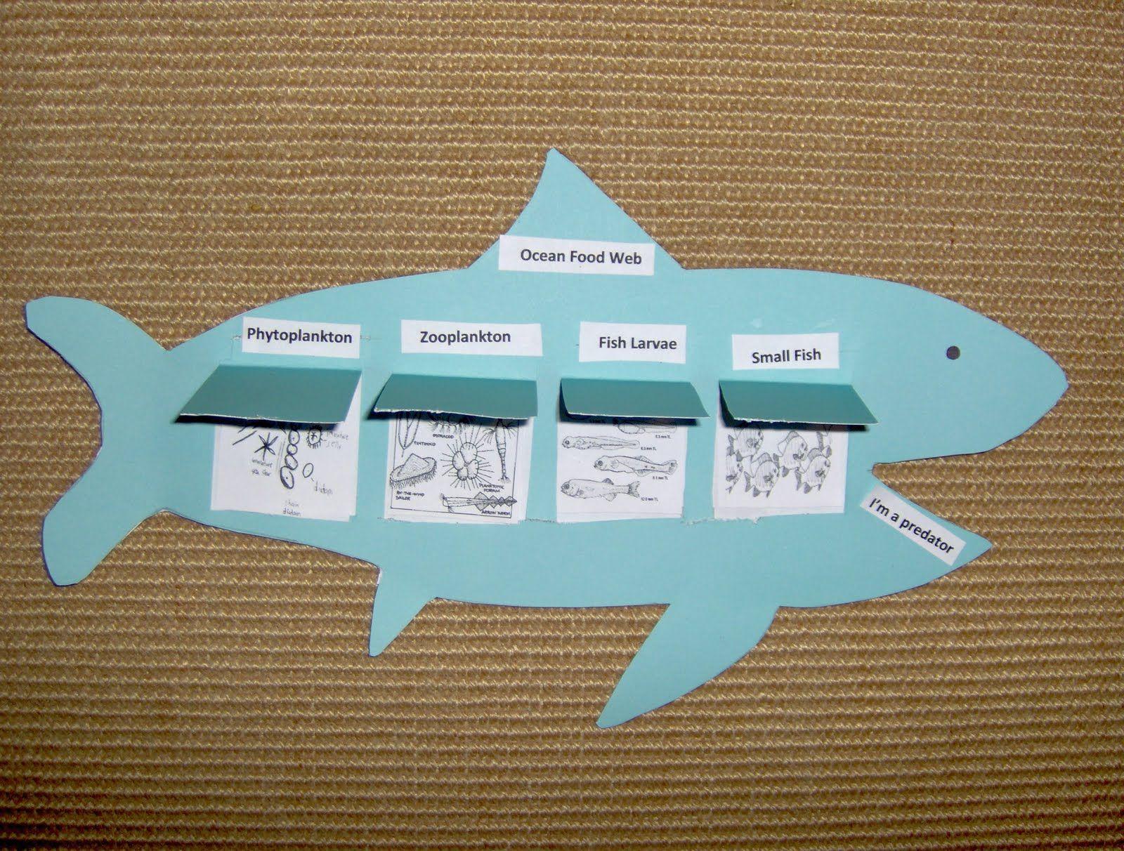 Food Chain Foldable