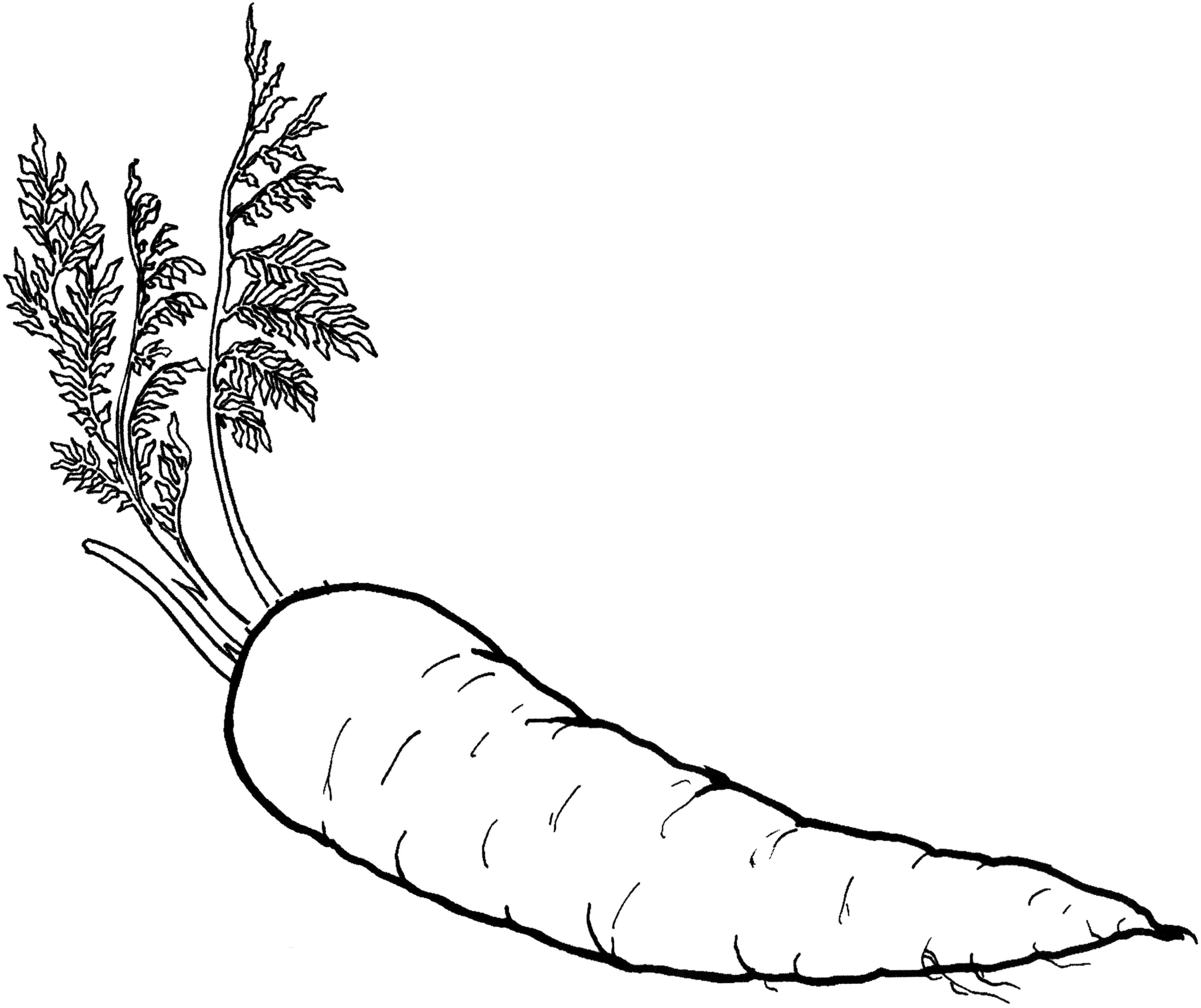 Printable Carrot Food Coloring Pages Fruit Sketch Coloring