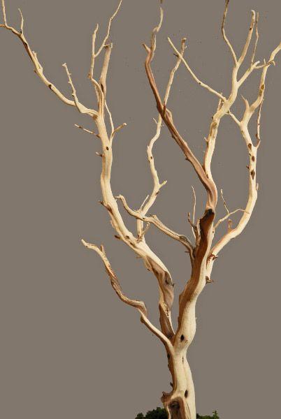 Manzanita Branches Sanded 21 38 Natural Manzanita