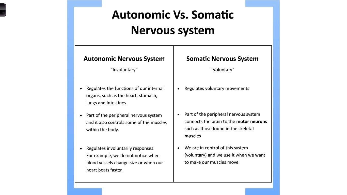 Autonomic Vs Somatic Nervous System