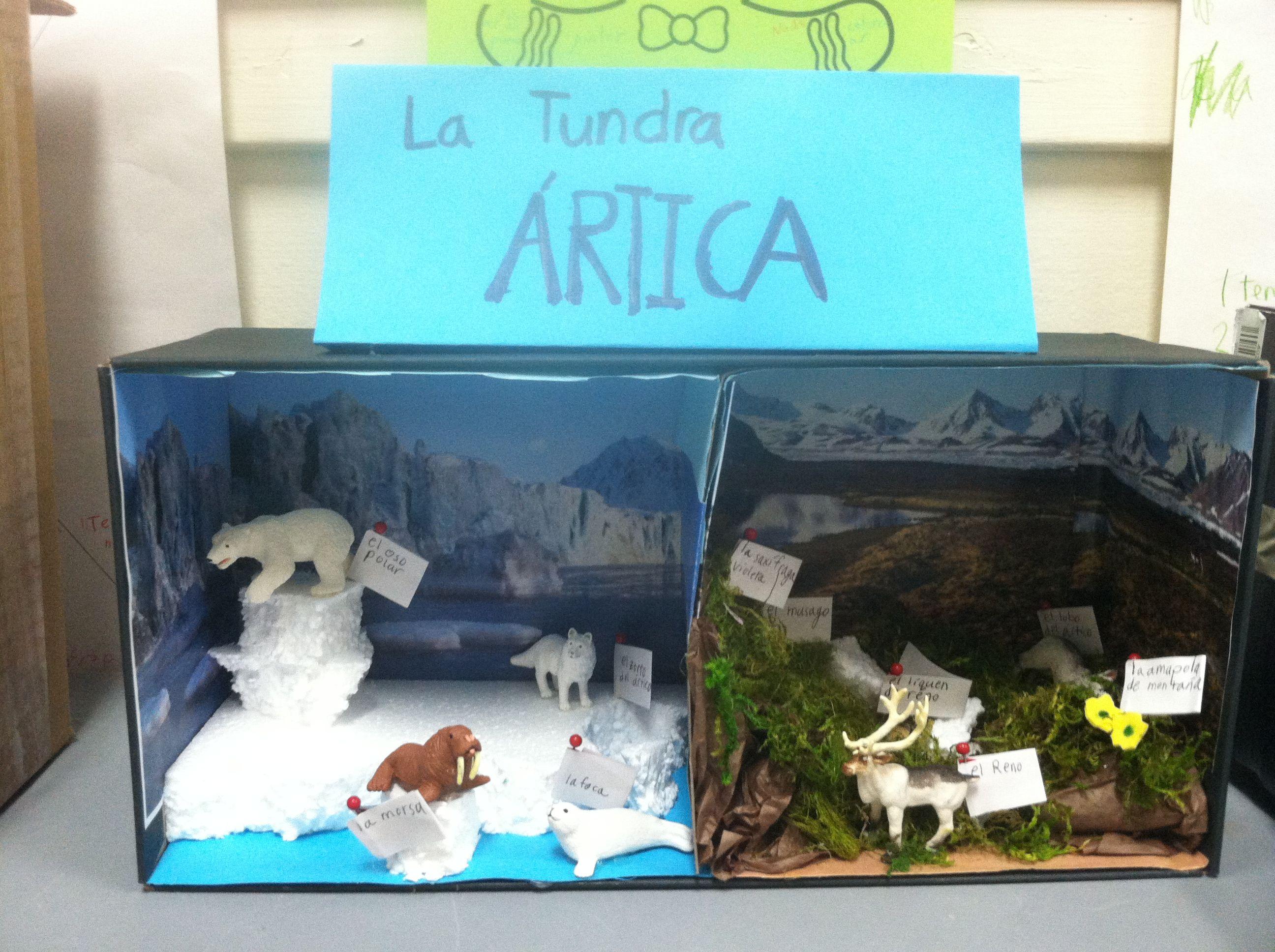 """Biorama"" biome diorama made by one of my 3rd grade"