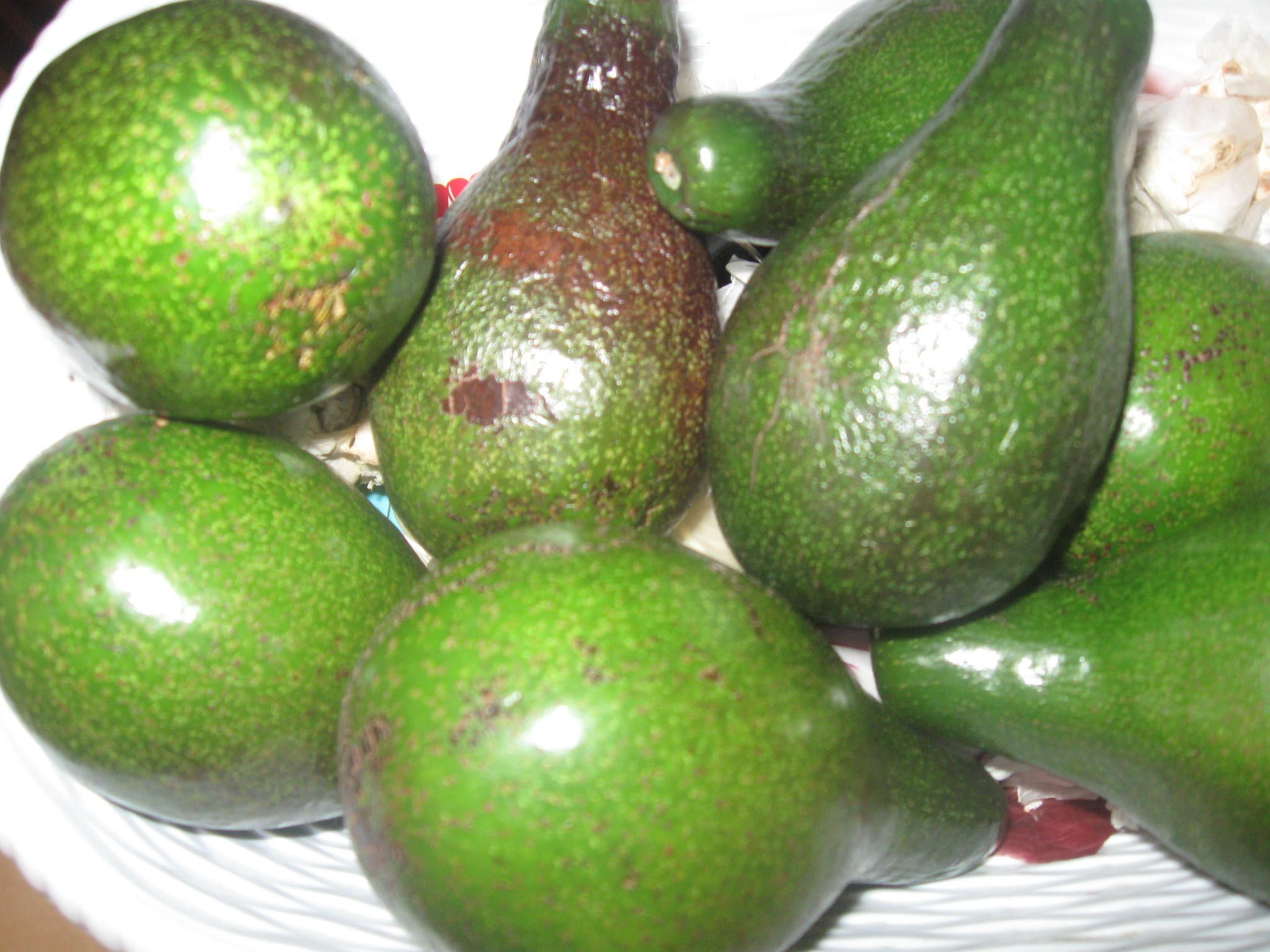 The Avocado Pear or Alligator Pear in Jamaica...The above