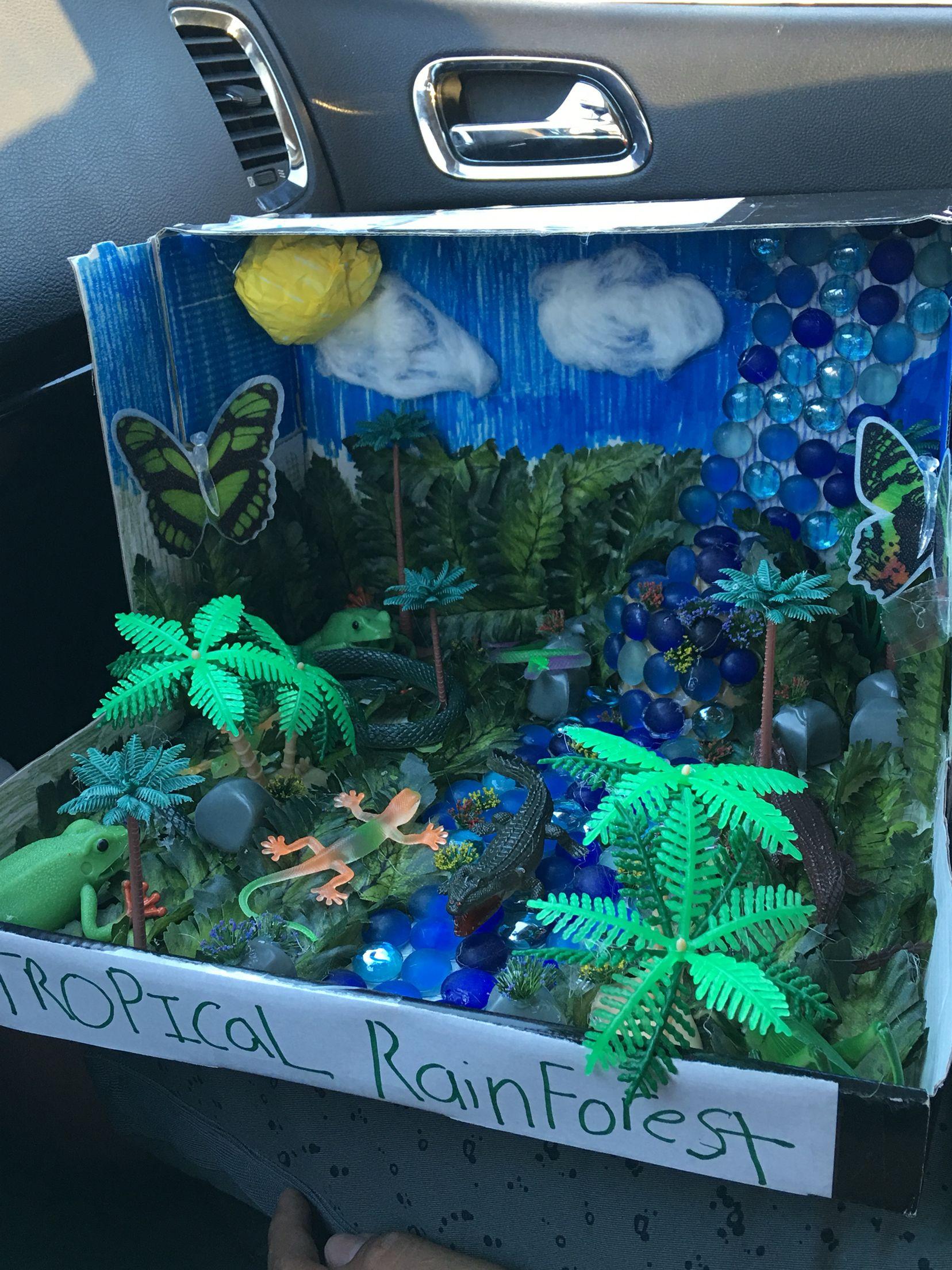 Biome Tropical rainforest project School Pinterest
