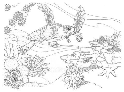 1000 images about sea coloring pages on pinterest coloring