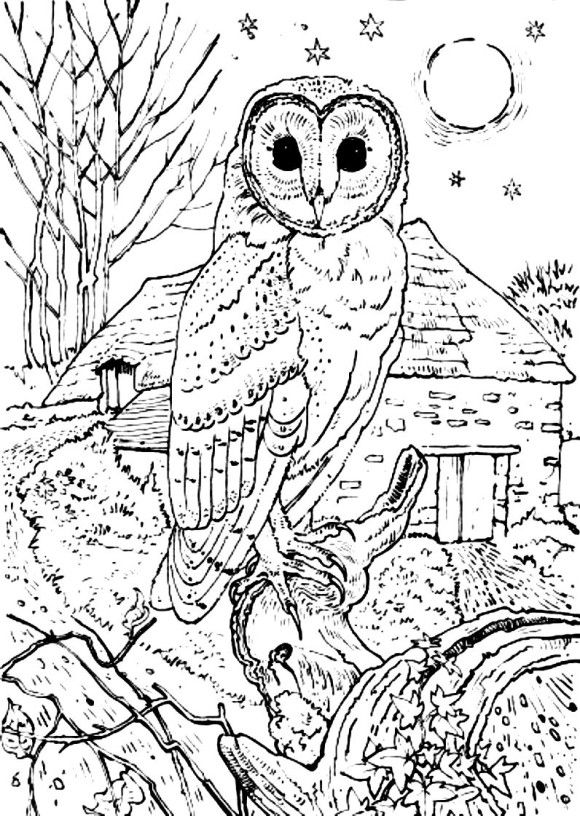 Barn Owl Coloring Pages Print