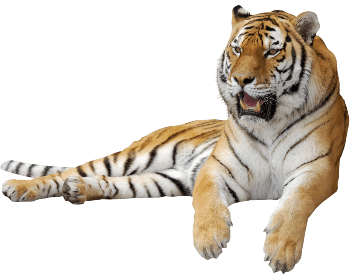 Tiger PNG Clipart Picture gif zvieratká Pinterest