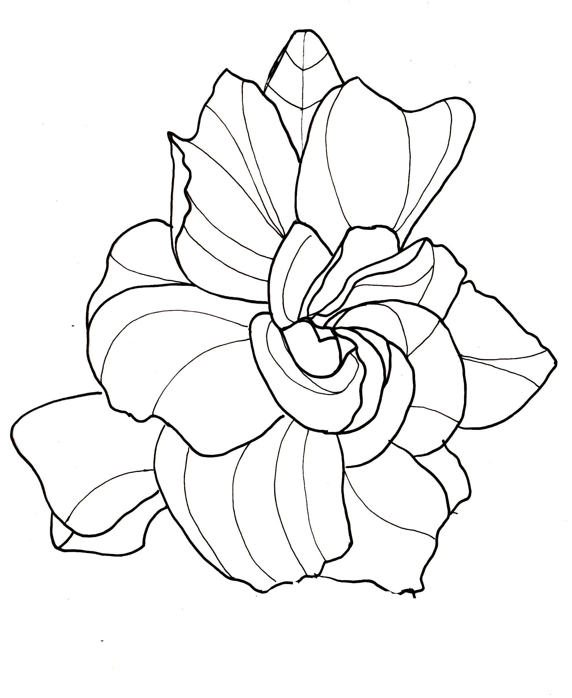 line drawing flowers gardenia Drawings Pinterest