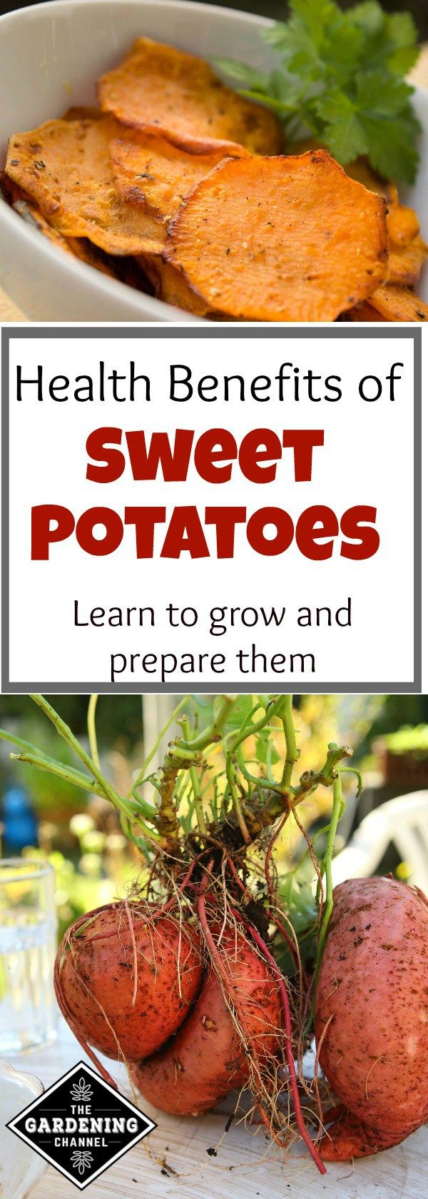 11 health benefits of sweet potatoes plus how to grow and cook