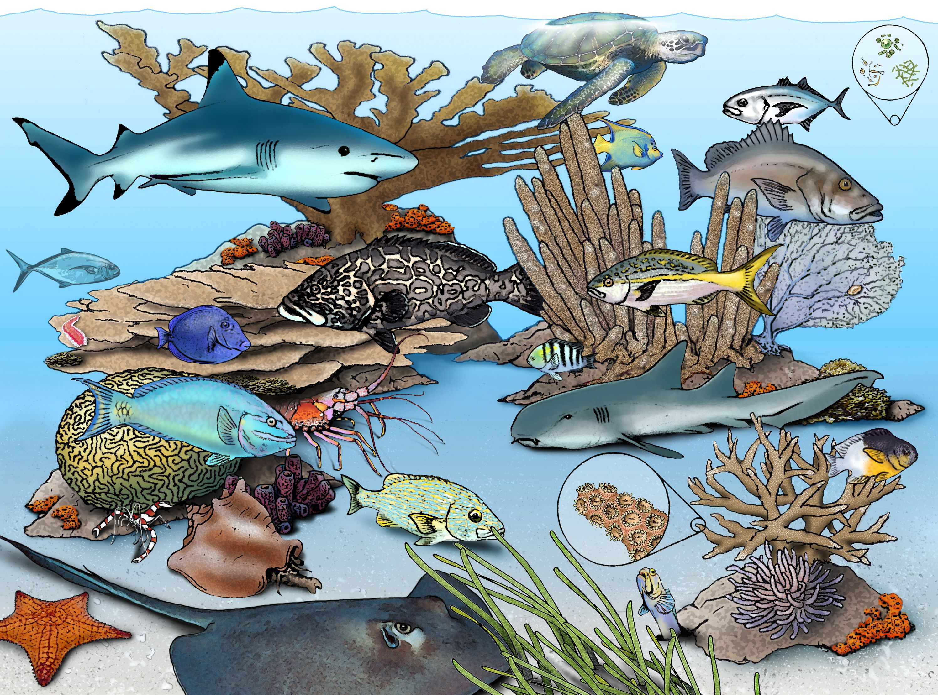 simple coral reef coloring pages Google Search Art