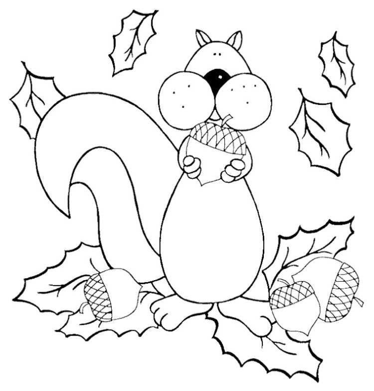 cute squirrel squirrel and coloring pages on pinterest