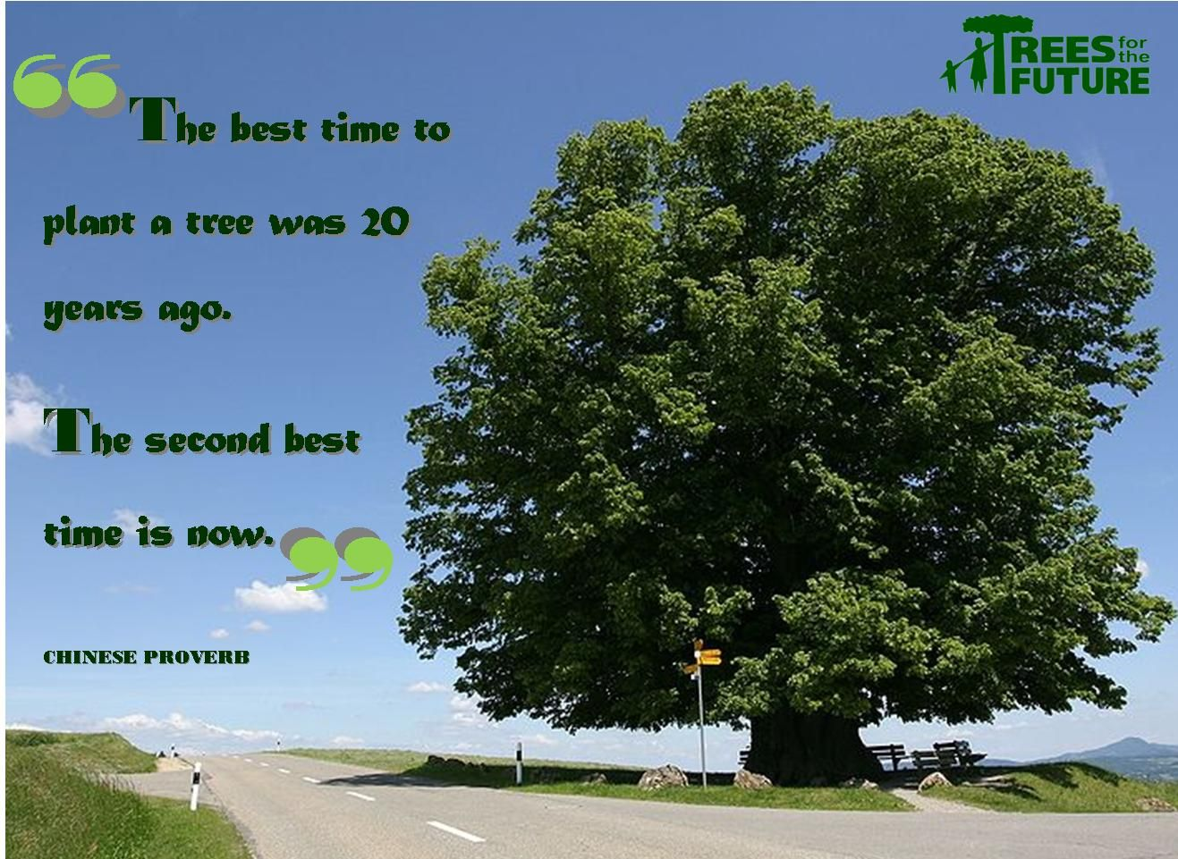 Plant trees. Save lives.
