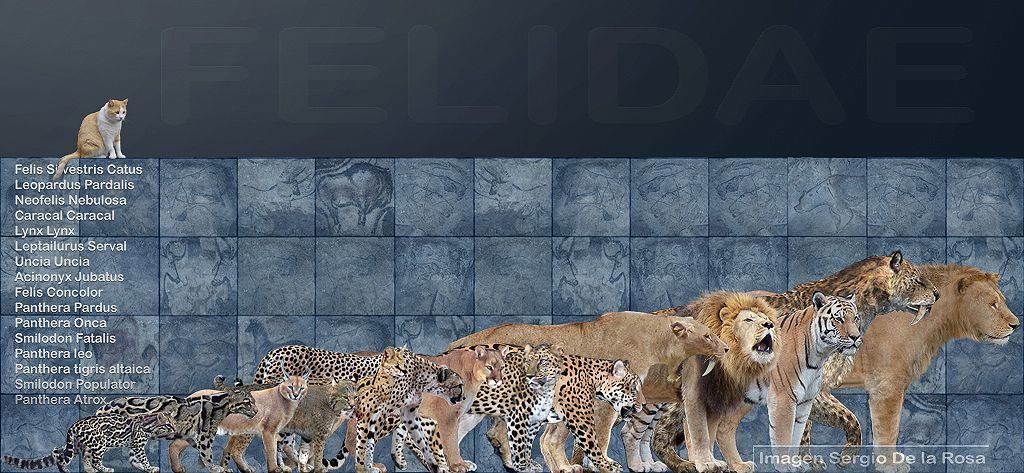 cats living and extinct. smilidon Extinct animals